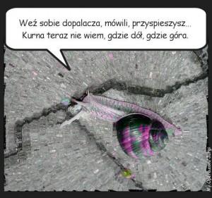 slimak-poszukujacy