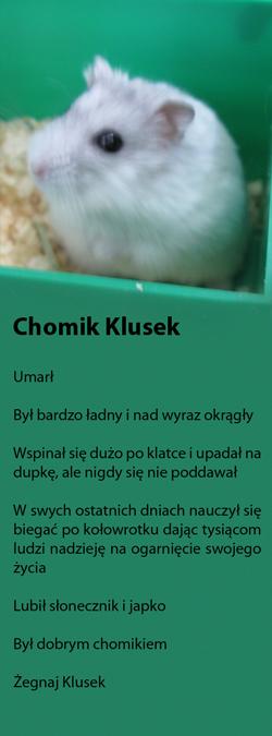 klusek