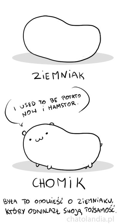 hamstor