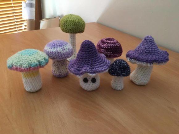 grzybkowa kolekcja